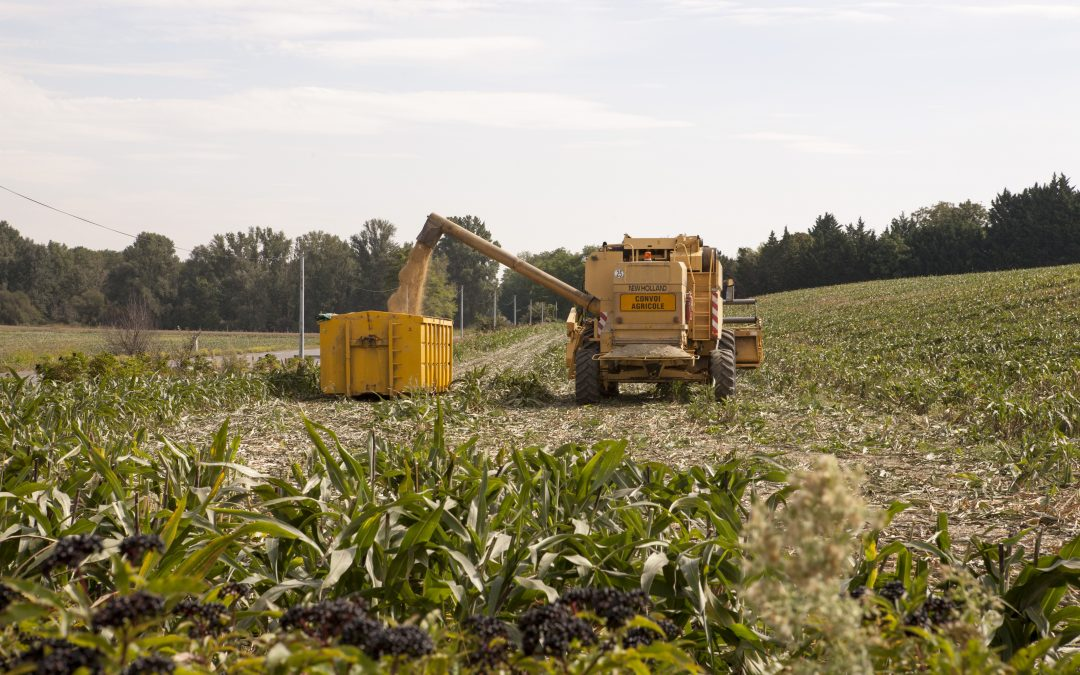 Un partenariat avec la Mutualité Sociale Agricole Midi-Pyrénées Sud pour soutenir les agriculteurs et salariés agricoles en situation de fragilité