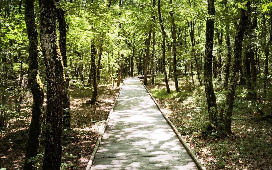 5 nouveaux circuits de balades et randonnées à la Forêt de Buzet
